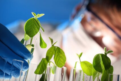 Scientist examining samples with plants,Closeup